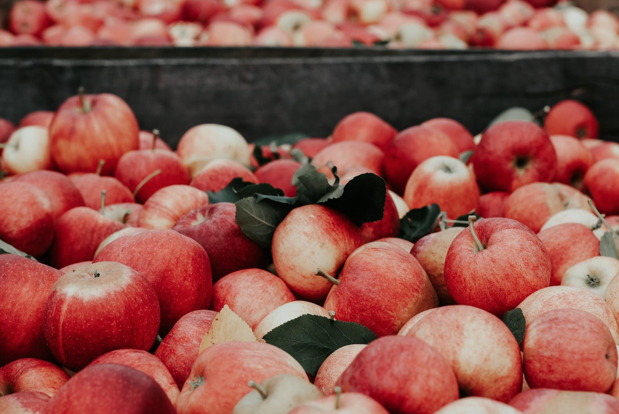 Nie wieder faulige Äpfel aufheben! 2. Platz beim SmartCity-Wettbewerb